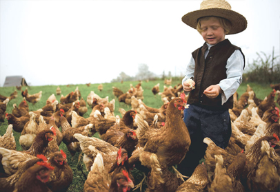 The young son of a hen farmer stands among a group of pasture raised chickens, feeding them from his hands.